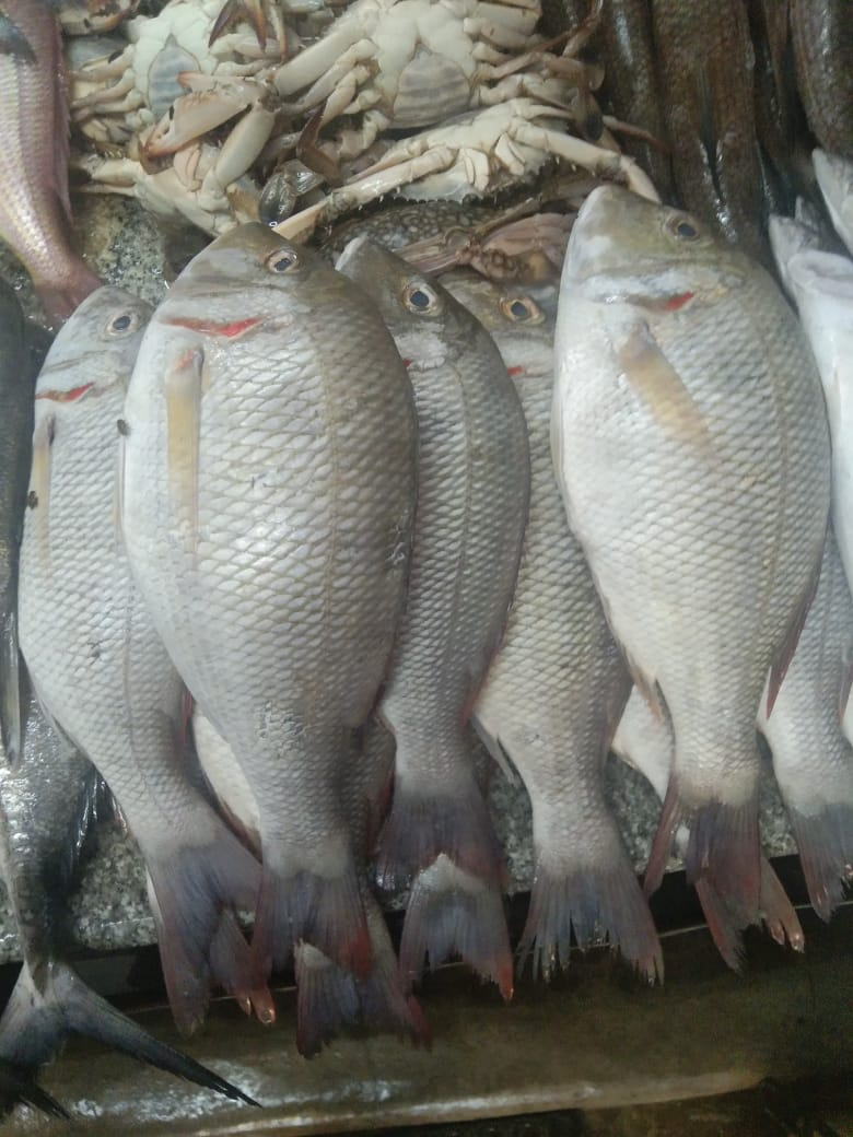 Sri-Sai-Fish-n-Fresh-12
