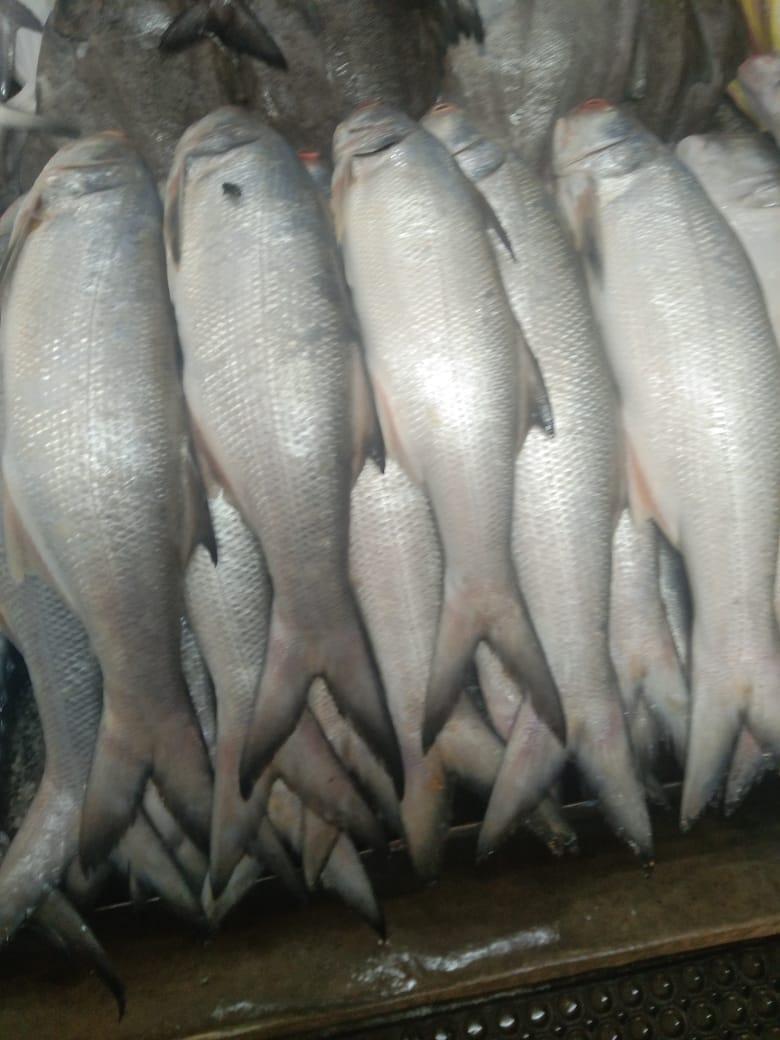 Sri-Sai-Fish-n-Fresh-13