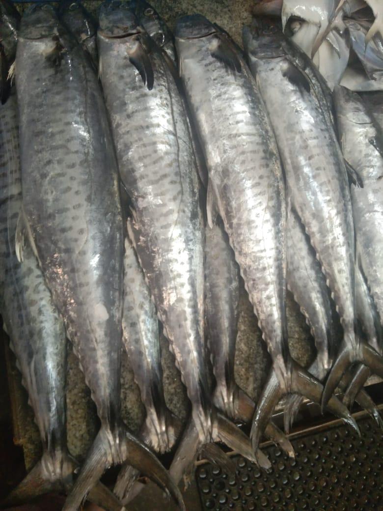 Sri-Sai-Fish-n-Fresh-3
