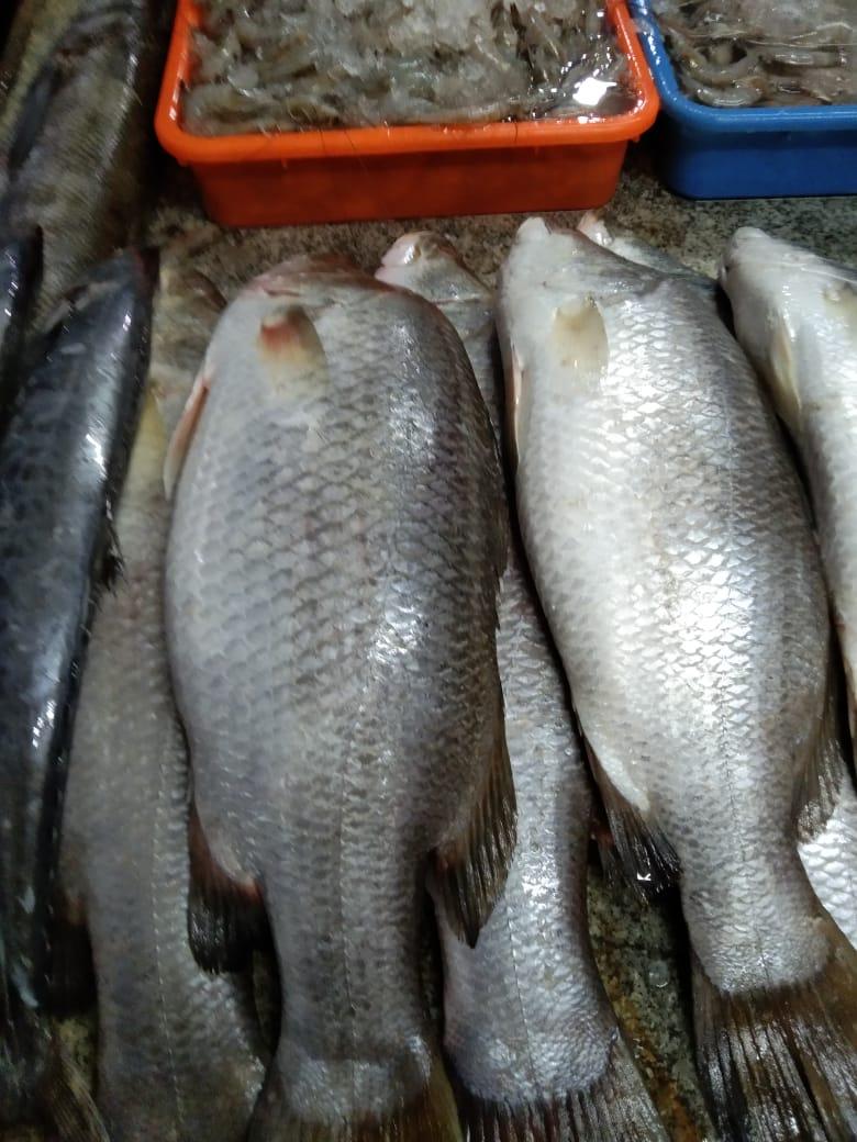 Sri-Sai-Fish-n-Fresh-4